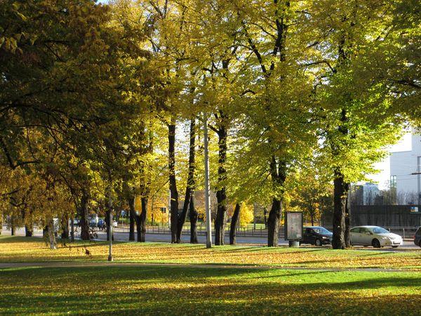 Wagocoro Helsinki